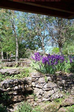 La Clé des Champs : Printemps en violet ... maisonnettes individuelles