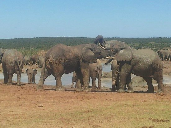 Earthstompers Adventures: Addo Elephant Park