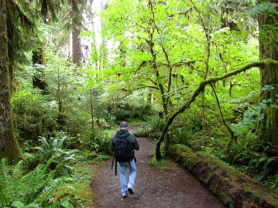 Miller Tree Inn Bed & Breakfast: Hall of Mosses in nearby Olympic National Park