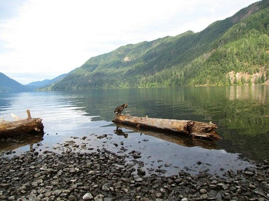 Miller Tree Inn Bed & Breakfast: Lake Crescent in nearby Olympic National Park