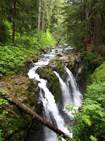 Miller Tree Inn Bed & Breakfast: Sol Duc Falls in nearby Olympic National Park