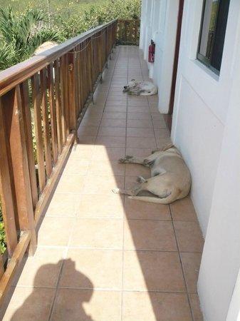 Hotel Popoyo: Lazy companions