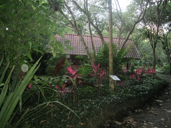 Arenal Oasis Eco Lodge & Wildlife Refuge: Room