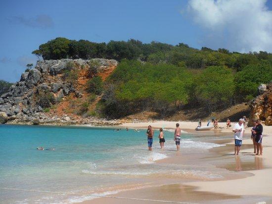 Captain Alan's Three Island Snorkeling Adventure : Turtle snorkeling spot
