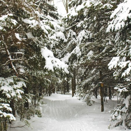 Mountain Trail Cross Country Ski Center: Beautiful snow covered trails for cross country skiing and snowshoeing