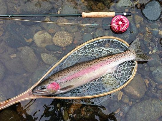 Indian Creek Lodge: Beautiful steelhead hen caught during my stay at Indian Creek!