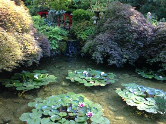 Butchart Gardens: water lillies