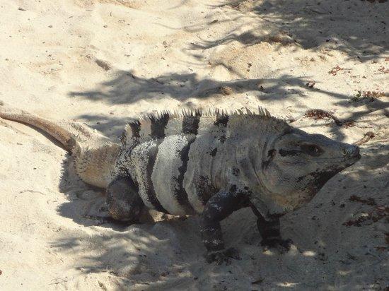 Faro Celerain Ecological Reserve : Local park resident