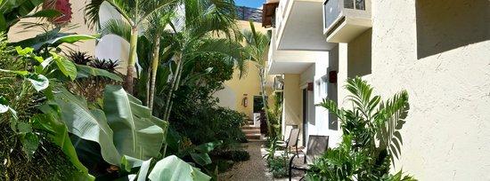 Posada Luna del Sur: Back garden