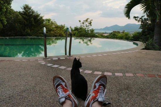 Baan Suan Sook Resort: Кот у бассейна