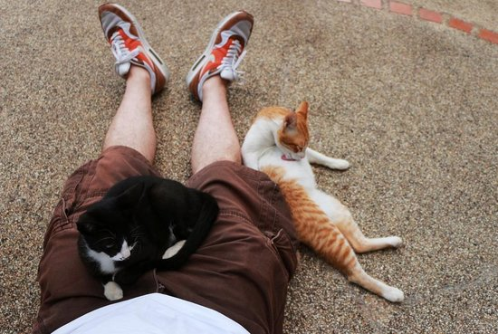 Baan Suan Sook Resort: Дружелюбные местные коты
