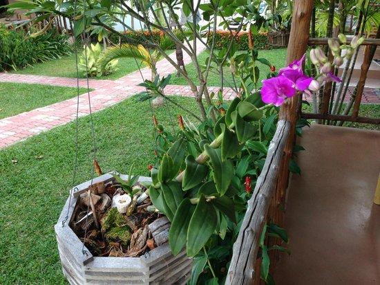 Bee Nat Garden Resort : Gartenanlage