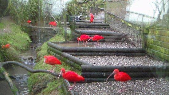 Exmoor Zoo: 1