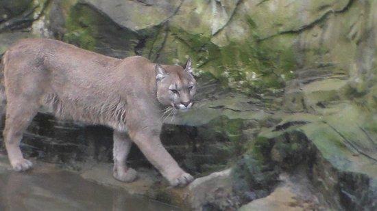 Exmoor Zoo: 4