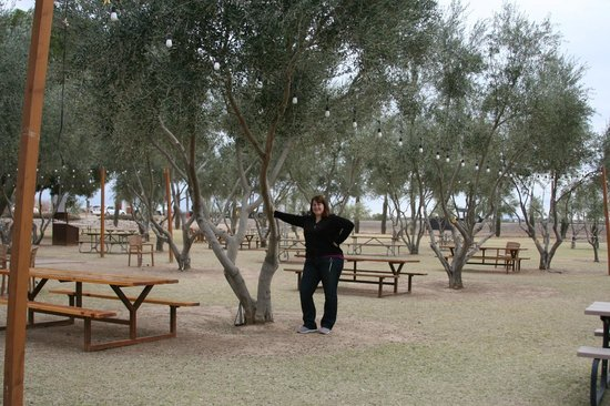 Queen Creek Olive Mill : No olives in the trees, but fun to inspect anyway.
