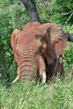 Tim Brown Tours - Durban Safari Tours: elephant eye lashes
