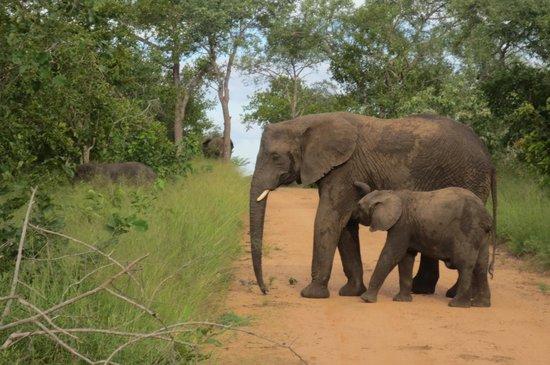Kapama River Lodge : Elephants