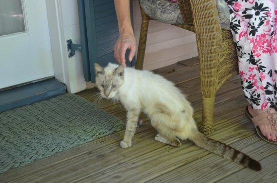 Andrews Inn and Garden Cottages : Resident Cat