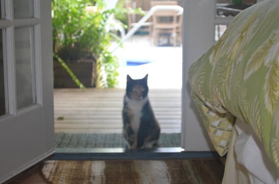 Andrews Inn and Garden Cottages: Resident Cat/Entrance to Venezia Room