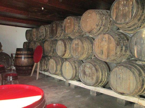 Museu do Vinho : adega e sala de provas