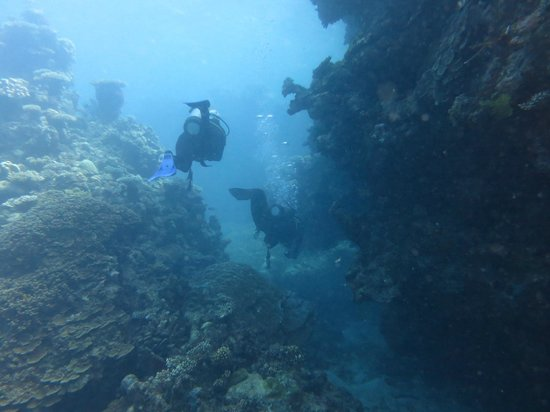 My instructor took this one picture of pro dive cairns day trips cairns tripadvisor - Pro dive cairns ...