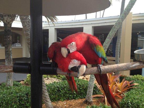 Miami Seaquarium: Love birds