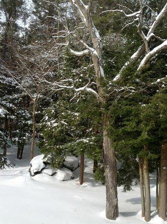 Kripalu Center for Yoga & Health: Beautiful in winter