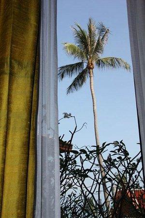 Q Signature Samui Beach Resort : Palme am Morgen