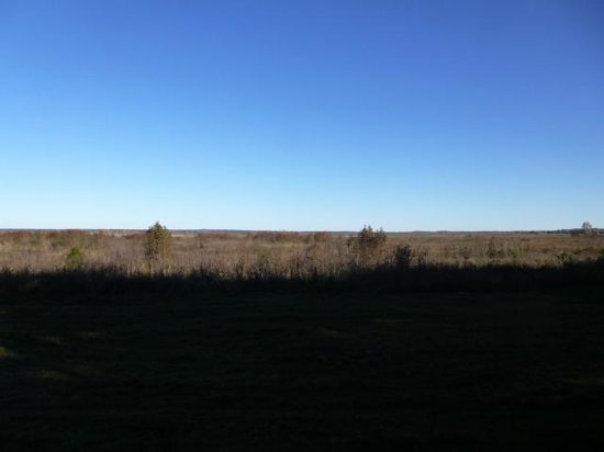 Paynes Prairie Preserve State Park: Prairie from observation area