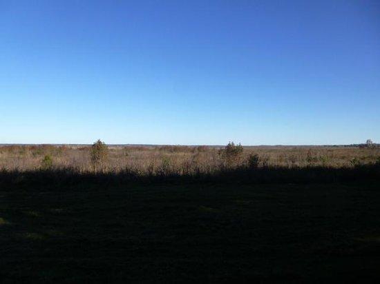 Paynes Prairie Preserve State Park : Prairie from observation area