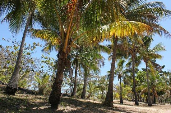 Great Keppel Island Holiday Village: Beautiful island