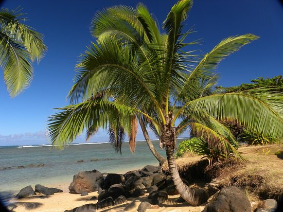 Kauai Photo Tours: Palm