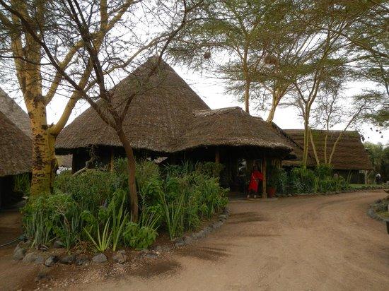 Tortilis Camp: Approaching camp