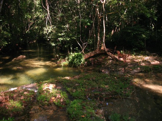 Lower Dover Field Station & Jungle Lodge : Watering hole