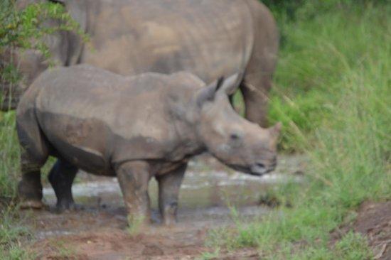 Waterbuck Game Lodge: Rhino