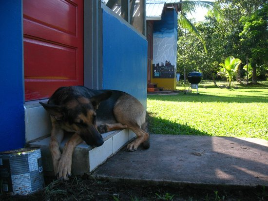 Lower Dover Field Station & Jungle Lodge: Dog day afternoon