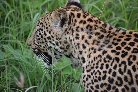 Waterbuck Game Lodge: Leopard