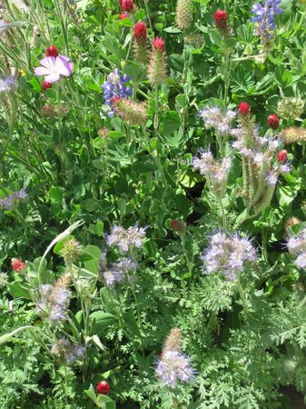 Aerie Bed and Breakfast / Homestay: Our wildflower garden