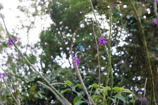 Mariposa Bed & Breakfast: hummingbird
