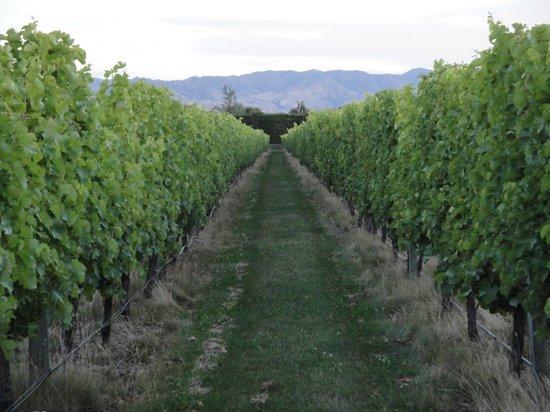 Marlborough Vintners Hotel : The vineyard
