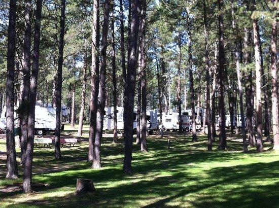 Big Pine Campground: Beautiful, tall ponderosa pine trees!