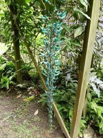 Diamond Botanical Gardens: The Jade Vine