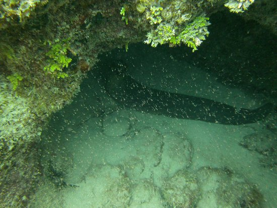 XTC Dive Center: Green moray eel