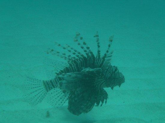 XTC Dive Center: Lionfish