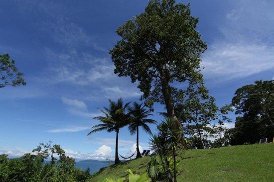 Hotel Las Caletas Lodge: Ceiba Tree