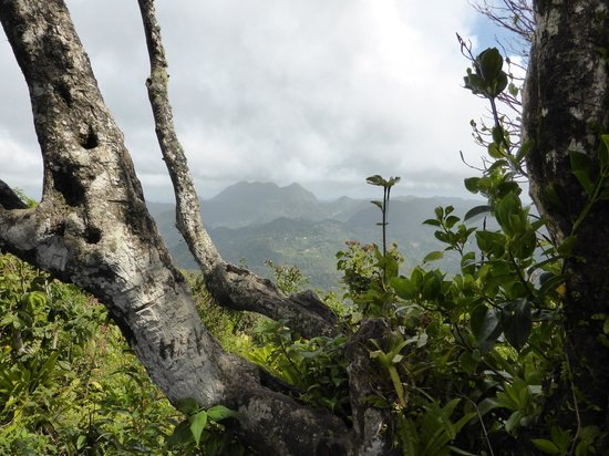 Pitons: View inland from the top of Gros Piton