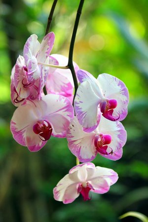 Kirpal Meditation and Ecological Center: Orchids Growing near Dragonfly Cabin