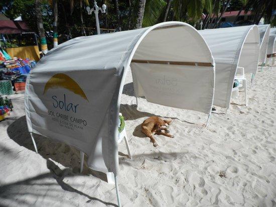 Sol Caribe Campo: Perros callejeros y basura en la playa privada