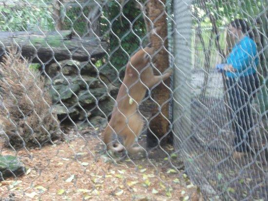 Tripadvisor Palm Beach Zoo