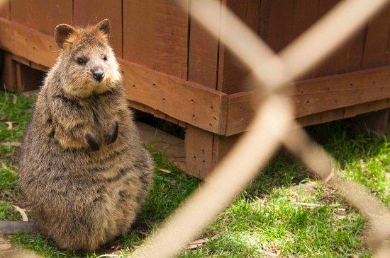 Ballarat, أستراليا: Quoka